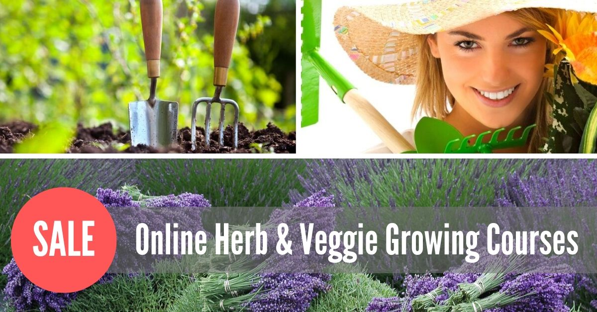 herb and veggie growing class