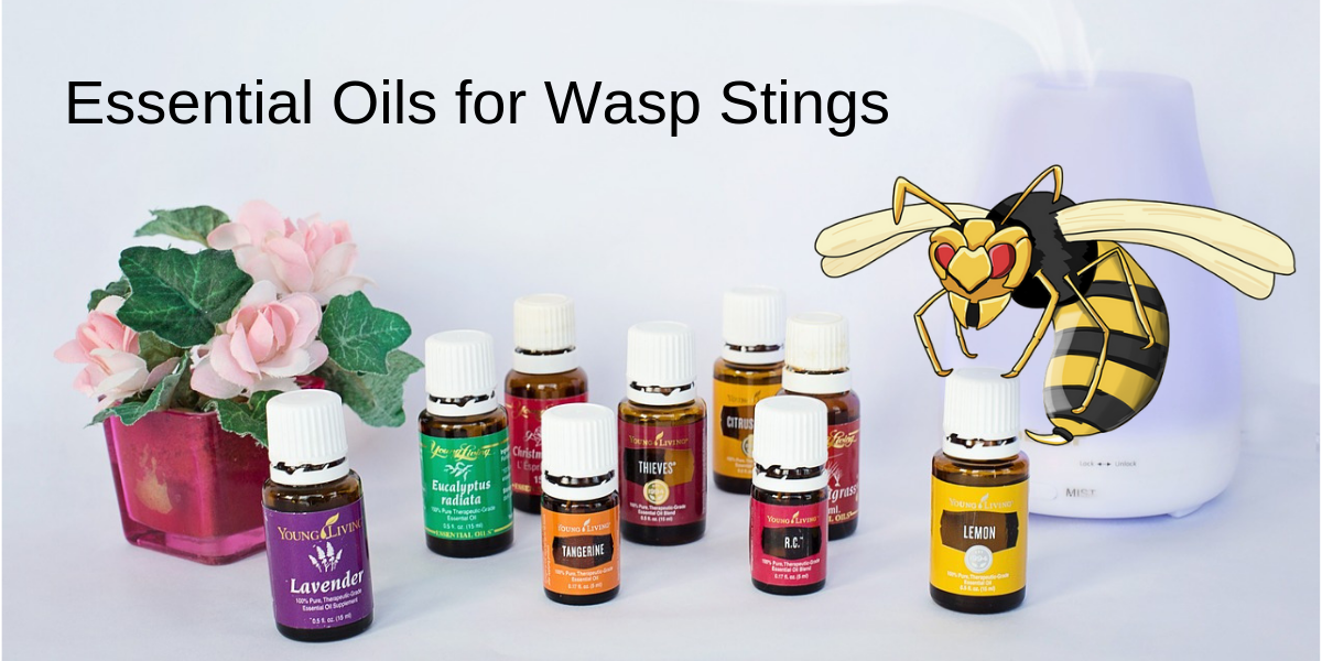 essential oils for wasp stings