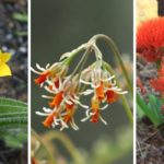 top traded medicinal plants of southern Africa